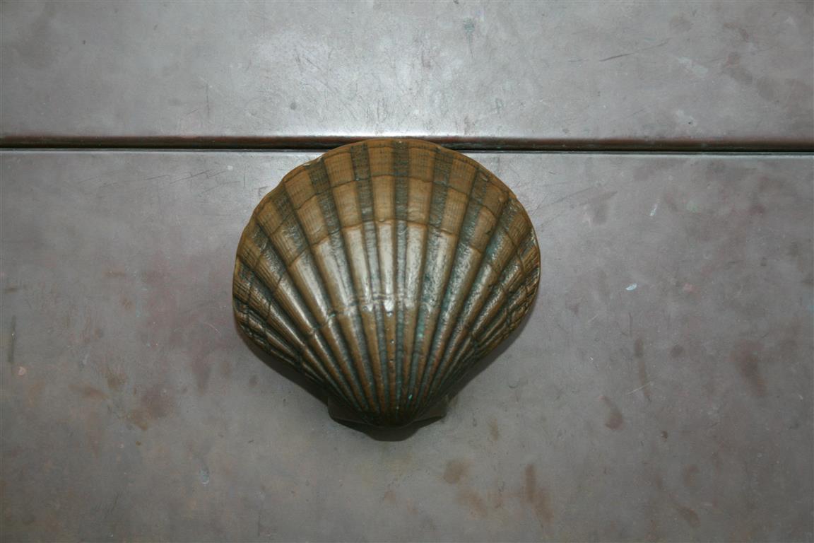 Augustinus-Muschel